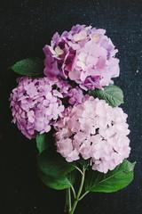 Bouquet of Hydrangea Flower