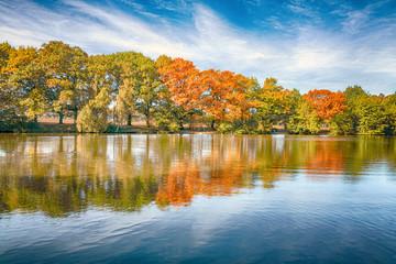 Bäume mit Herbstlaub am See
