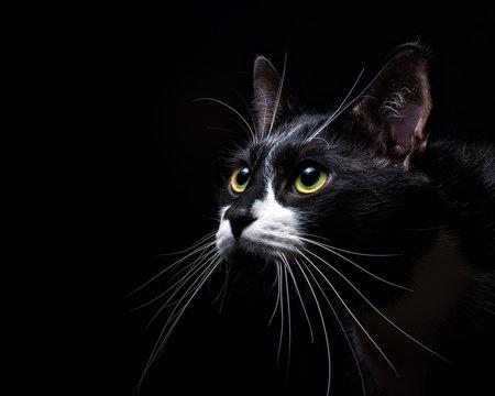 Captivated