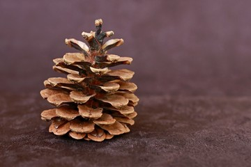 Single pine cone on brown velvet background