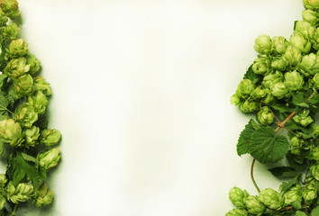 Fresh hop cones on wine on white background, top view