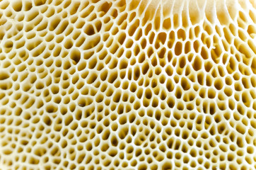 Printed kitchen splashbacks Macro photography Mushroom macro spawn detail