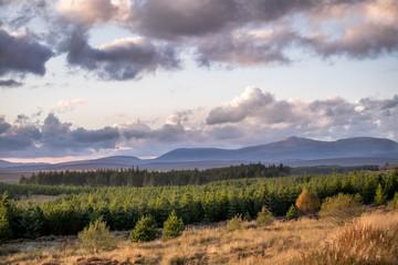 Golden Light over the Scotish Highlands