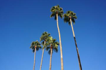 tropical palm trees under blue sky