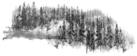 Watercolor group of trees - fir, pine, cedar, fir-tree. black and white forest, countryside landscape. Drawing on white isolated background.