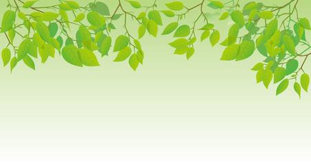 新緑の葉っぱのイメージイラスト