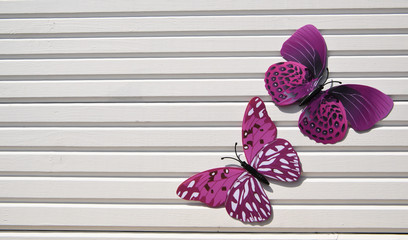 photography image of pink white fun butterflies in the sunshine on white wood background taken in South coast England UK