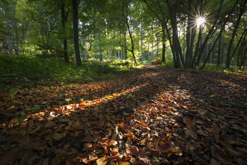 Autumn forest scenery with sun  rays of warm light illumining a footpath leading into the woodland