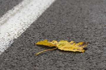 Autumn time one yellow leaf has falling on the asphalt street with single with line