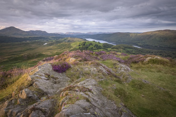 Lake district at his best with blossoming heath and mountains Skiddaw and lake Coniston water in the background