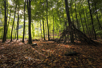 Shelter in autumn woodland sunlight warm and golden through trees