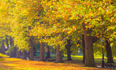 Autumn scene, avenue lined with trees in Green Park, London