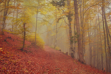 Forest trail in the mountains on autumn day.