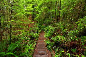 a picture of an Pacific Northwest rainforest trail
