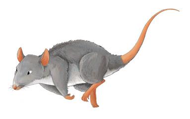 Cartoon animal - rat - some activity - illustration for children
