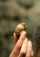 Snail in hand