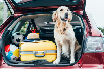 Spoed Fotobehang Hond dog sitting in car trunk with luggage