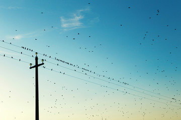 Birds on high voltage cables at sunset