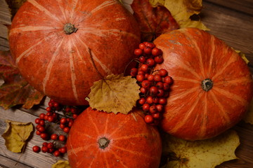 Autumn still life of pumpkin, leaves and ashberry