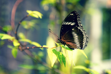 Beautiful brown butterfly sitting on a plant on blurred background. Copy space. Close-up.
