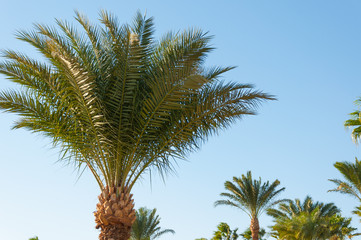 Palms against the blue sky