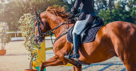 Sorrel dressage horse and rider in uniform performing jump at show jumping competition. Equestrian sport background. Chestnut horse portrait during dressage competitio