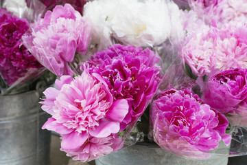 Bouquets of pink peony blossoms