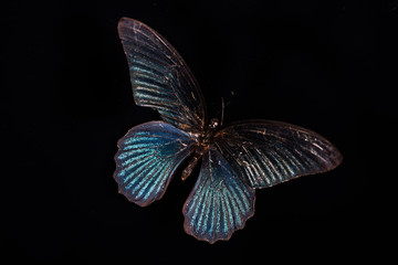 butterfly on black