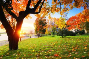 Fall scene theme