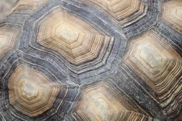 Turtle shield animal pattern