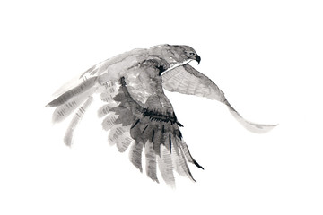 The flying falcon. Ink drawing.