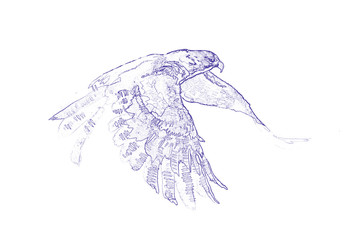 The flying falcon. Pen drawing.