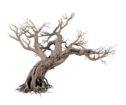 Dead tree isolated on white background, 3D rendering