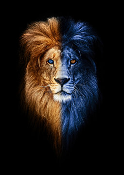 Portrait of a Beautiful lion, lion in dark, fire and ice