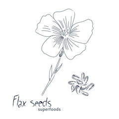 Flax seeds hand drawn sketch. Flax flower and seeds isolated on white background.
