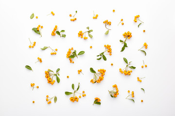 Autumn pattern made of Pyracantha Firethorn orange berries and green leaves. Flat lay, top view.