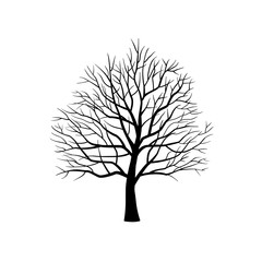 Isolated silhouette of bare tree without leaves on white background.