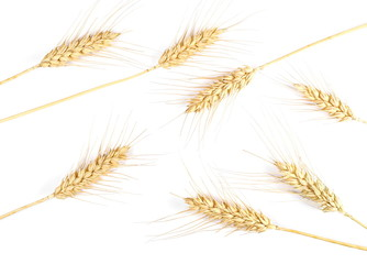 Ears of wheat isolated on white background, top view