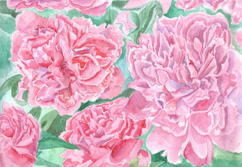 Peony hand drawn watercolor illustration. Pink and green beautiful floral background.