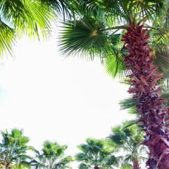 Palm trees surrounding blue sky sky