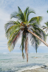 Palm and the sea in Cahuita National Park, Costa Rica