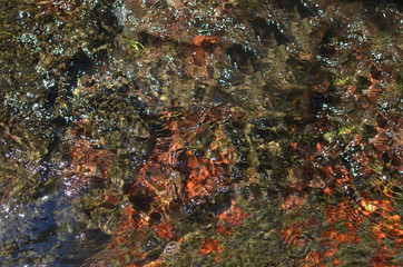 Colorful bottom of a river with fresh wavy water