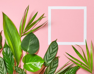 Wall Mural - Tropical leaves and white frame