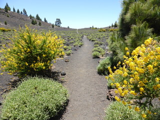 Fantastic hiking trail through a volcanic landscape with flowers on the edge of the Canary Island of La Palma