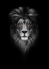 Foto auf Acrylglas Löwe Portrait of a Beautiful lion, lion in dark