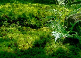 Door stickers Water drops on fresh green grass background.