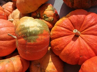 Orange colored winter squash on display in a market