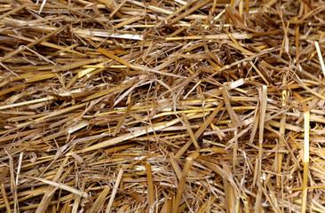 Stroh Hintergrund Heu Nahaufnahme Textur