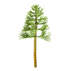 Carboniferous Pine Tree - The earliest conifers date to the Carboniferous Period possibly arising from the Cordaites, a genus of seed-bearing Gondwana plants with cone-like fertile structures.