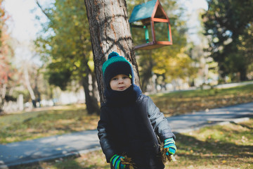 a little boy playing in autumn forest, collecting leaves
